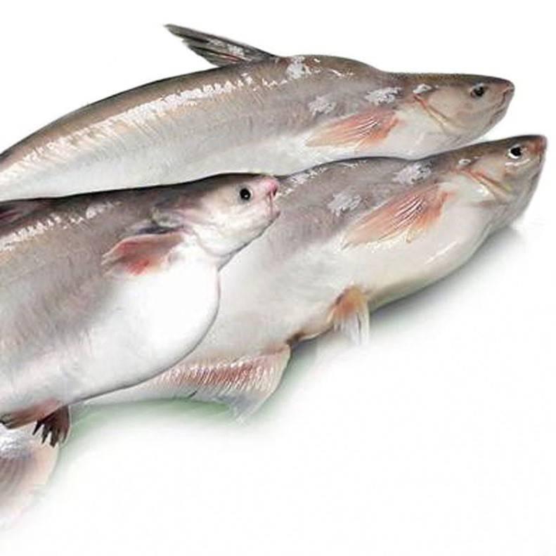 cá hú kho là món cơm ngon